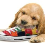 Cachorro que muerde todo: cómo educarlo para dejar de morder todo