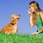 Cómo educar a un perro a venir cuando le llamas