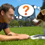 Cómo educar a un perro cachorro, adulto: adiestramiento canino, enseñar