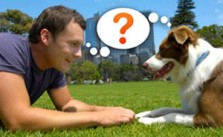 Adiestamiento canino
