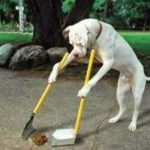 Cómo enseñar a un perro a ir al baño, educar a hacer sus necesidades