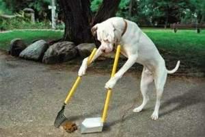 Resultado de imagen para educar al perro