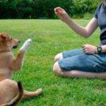 Cómo educar a un cachorro: las reglas esenciales para entrenarlo