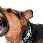 Perro agresivo: cómo educar a un perro agresivo con otros perros