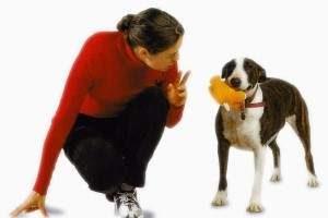 Cómo castigar a un perro
