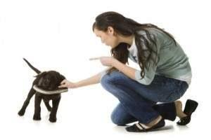 Como castigar un perro
