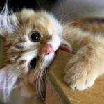 Cómo enseñar a un gato a no morder, arañar o subir en la mesa