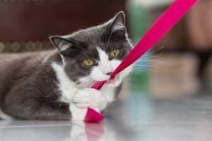 Cuidados de un gatito, como educar a un gatito