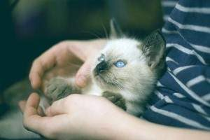 cuidados de un gatito