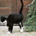 Cuidados de un gatito: el territorio del gato