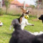 Juegos para perros: cómo enseñar trucos a tu perro, como dar la pata
