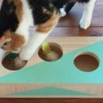 Juegos para gatos: cómo hacer juguetes para gatos o gatitos