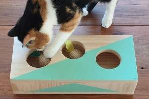 Gatos O Juegos GatosCómo Hacer Juguetes Gatitos Mascotas Para bIyf7gv6Y