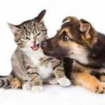 Errores que no se deben cometer con las mascotas