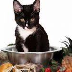 Comidas que tu gato no debería comer