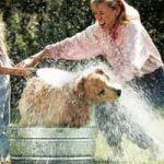 Cómo bañar a un perro: cachorro, adulto