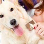 Cómo cuidar a un perro: recién nacido, cachorro, adulto