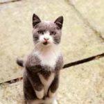 Cómo saber si tu gato te quiere decir algo