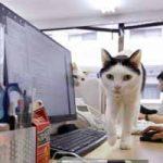 ¿Cómo ayudan las mascotas a prevenir el estrés?