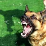 Perros agresivos: cómo identificarlos, qué hacer, soluciones