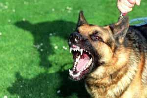 Perros agresivos soluciones