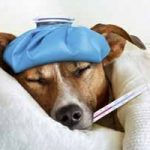 Cómo saber cuando tu perro está enfermo: síntomas más comunes