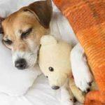 Cuánto duermen los perros: horas al día, patrones normales