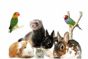Mascotas exóticas y sus cuidados