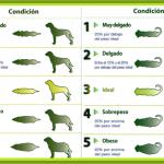 ¿Cuál es el peso ideal de una mascota perro o gato?