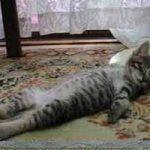 ¿Por qué mi gato duerme tanto?