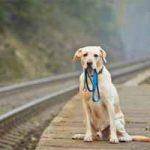 Razones por las cuales una persona abandona a su mascota