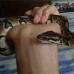 Serpientes como mascotas: algunas cosas que debes saber antes de tener una