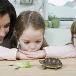 Tortuga como mascota: características y cuidados