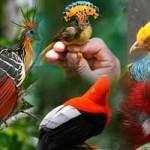 Aves exóticas del mundo y sus nombres
