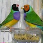 Imágenes de aves exóticas del mundo: mascotas para el hogar