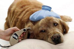 Cómo prevenir enfermedades mortales en tus mascotas: perros, gatos ...