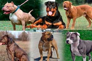 Las 29 razas de los perros más peligrosos del mundo 2021